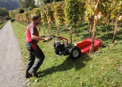 Rapid Rex and mulching mower